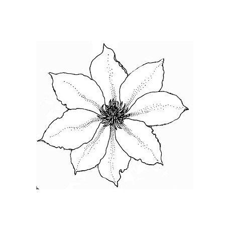 Sketch scrap par Nanou Clematite-fleur-tampon-nm