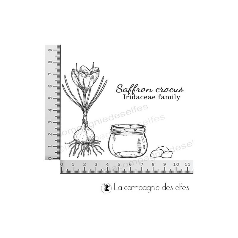 Coloriage Fleurs Bulbe.Tampon Bulbe Safran La Compagnie Des Elfes