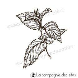 Tampon feuilles menthe