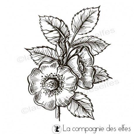 Sketch carte ou page XoXo. Tampon-fleur-eglantier