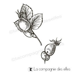 Tampon fruit églantier