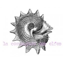 Shell stamp | tampon coquillage mer | tampon scrapbooking mer
