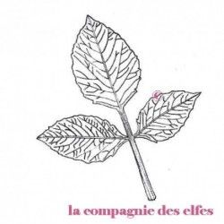 dahlia stamp | tampon dahlia