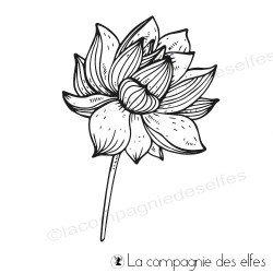 Tampon lotus semi ouvert