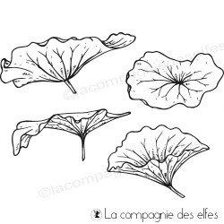 Tampons feuilles lotus
