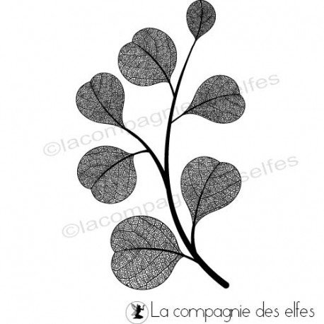 Page 2/2 Cachet-branche-eucalyptus