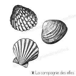Tampons coquillages de mer