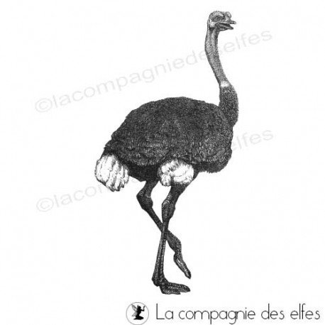 Timbre encreur autruche | ostrich rubberstamp