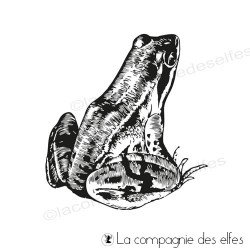 Timbre encreur grenouille | frog rubber stamp
