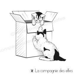 Tampon les chats dans un carton