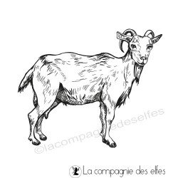 Tampon chèvre biquette