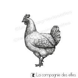 La poule tampon