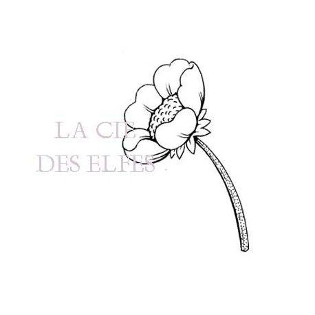 Anémone fleur nm tampon