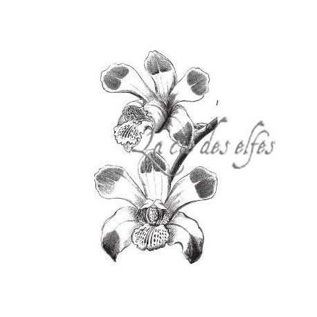 orchidées tampon nm