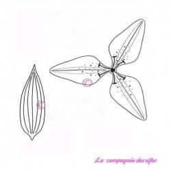 fleur de LYS - grand modèle - tampons nm
