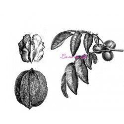 tampon noix cerneau et feuilles de noyer- nm