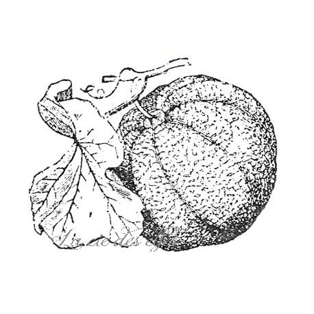 Tampon melon   tampon scrap vacances   tampon encreur jardin   tampon fruit