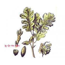 tampon feuilles de chêne nm