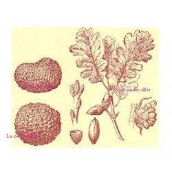 chêne truffier - feuilles et truffes tampon nm