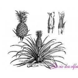 pine apple stamp | tampon branche ananas
