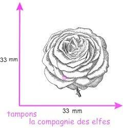 rose pompon tampon nm