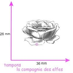 rose ouverte tampon nm