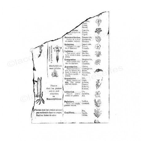 Pages en scrap Janvier 2020. Page-livre-botanique-dechiree-tampon-nm