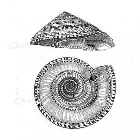 Sea rubber stamp | sello de goma | coquillage | tampon la mer