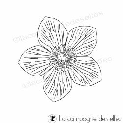 hellébore - rose de Noël - tampon pm