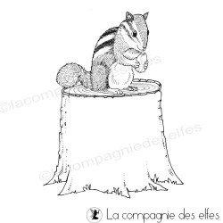 petit écureuil de la forêt - tampon nm