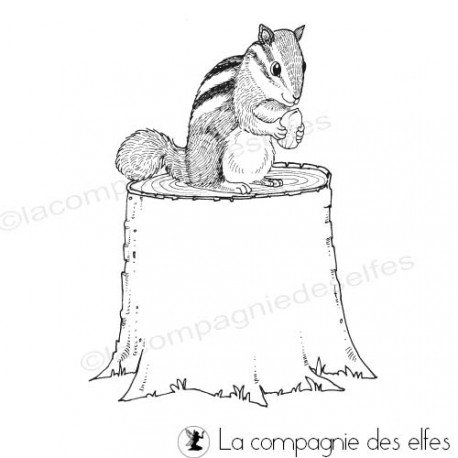 squirrel rubberstamp | tampon encreur écureuil