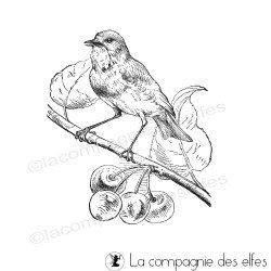 oiseau sur des cerises tampon nm