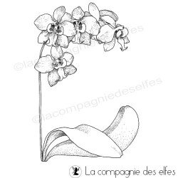 Tampon orchidée mariage | tampon fleur mariage