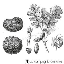Tampon encreur truffe | tampon chêne truffier