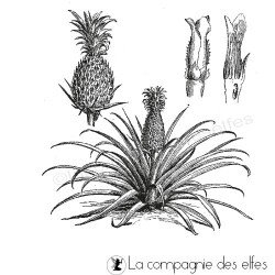 pine apple stamp | tampon branche ananas