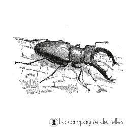 tampon insecte lucane nm