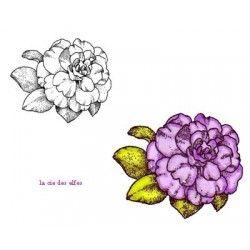 Camélia GM fleur tampon nm