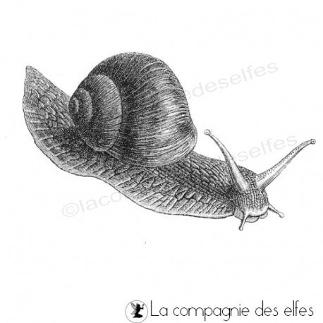 tampon encreur escargot | snail rubber stamp